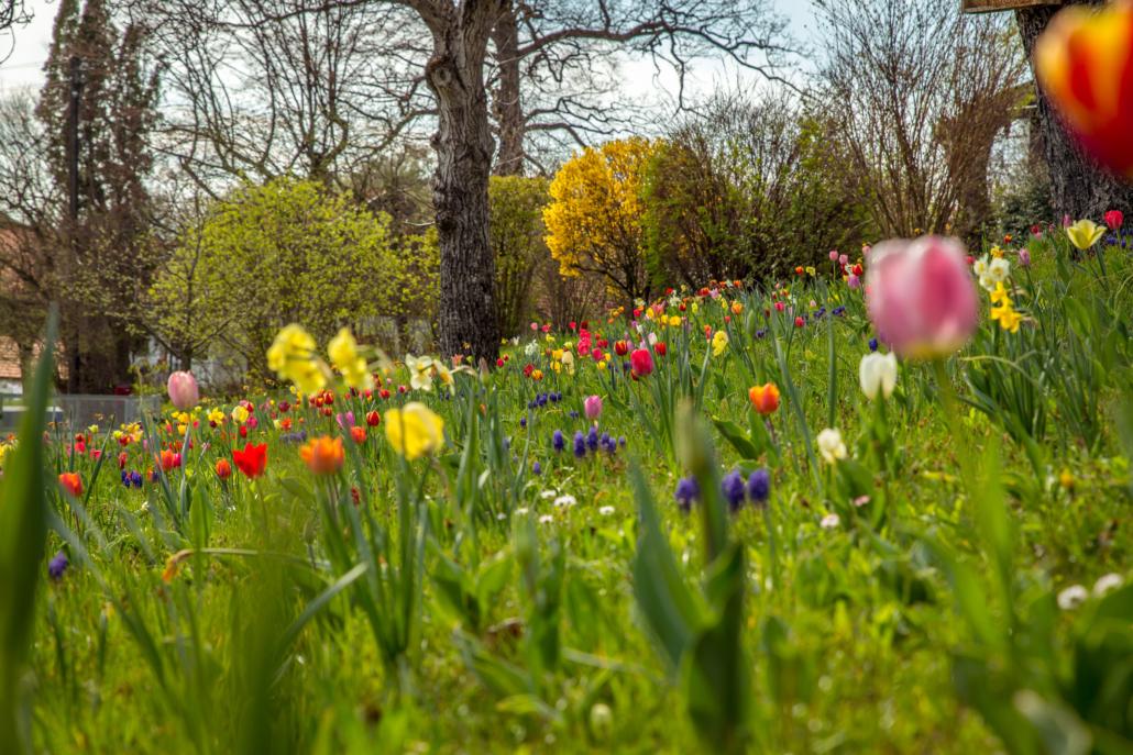 Frühlingswiese in der Umgebung