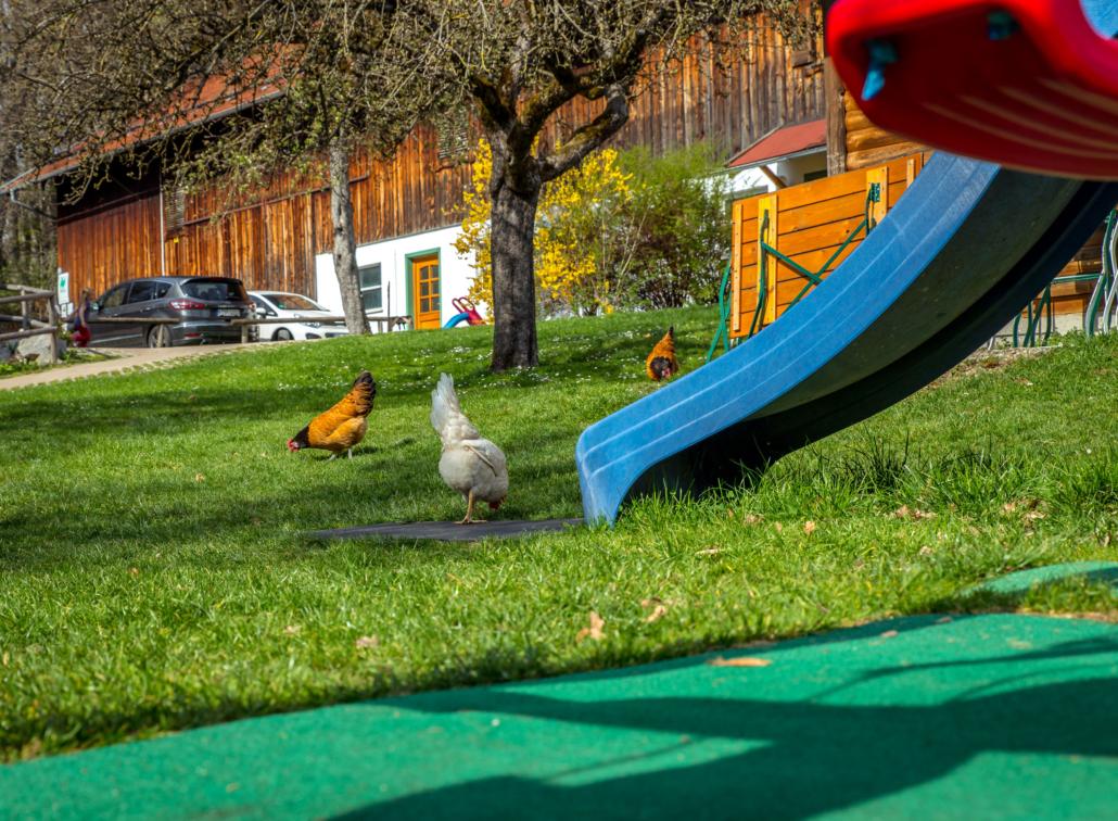 Unsere Hühner laufen frei herum